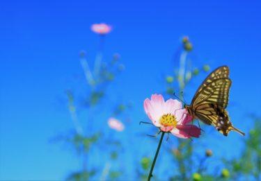 『「死にたい」気持ちは蝶になって飛び立つ前のサナギ』